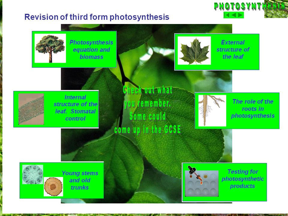 PHOTOSYNTHESIS Check out what you remember. Some could