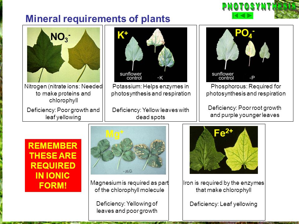 REMEMBER THESE ARE REQUIRED IN IONIC FORM!