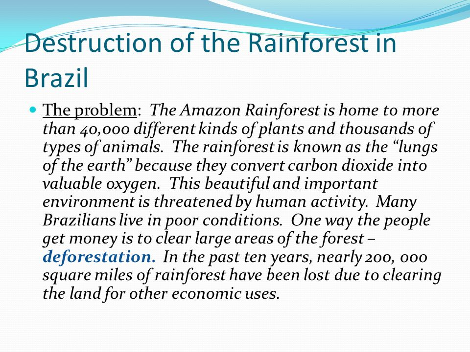 Destruction of the Rainforest in Brazil