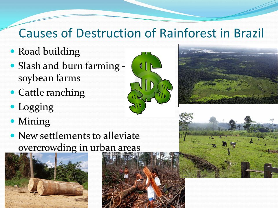 Causes of Destruction of Rainforest in Brazil