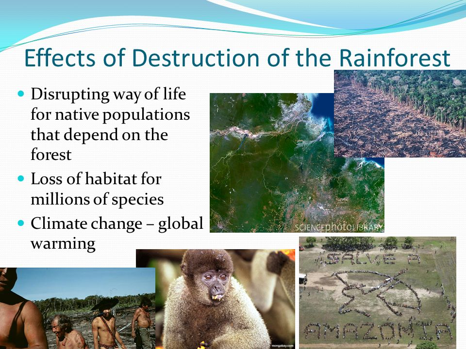 Effects of Destruction of the Rainforest