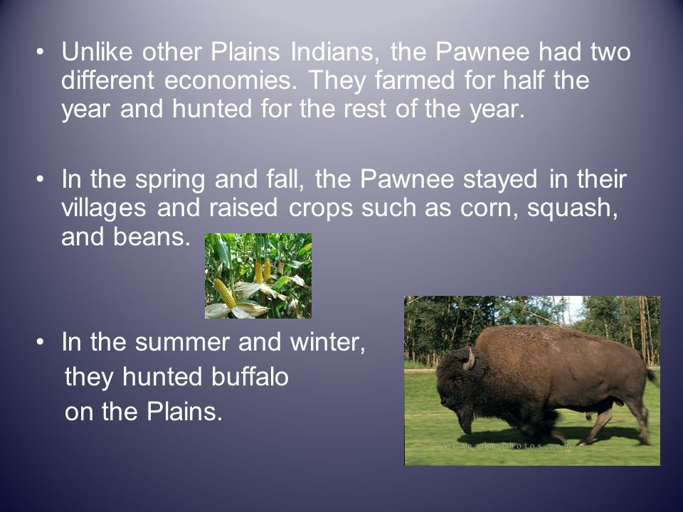 Unlike other Plains Indians, the Pawnee had two different economies