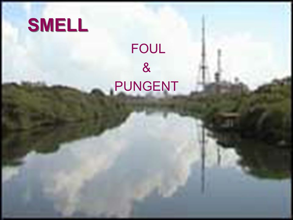 SMELL FOUL & PUNGENT