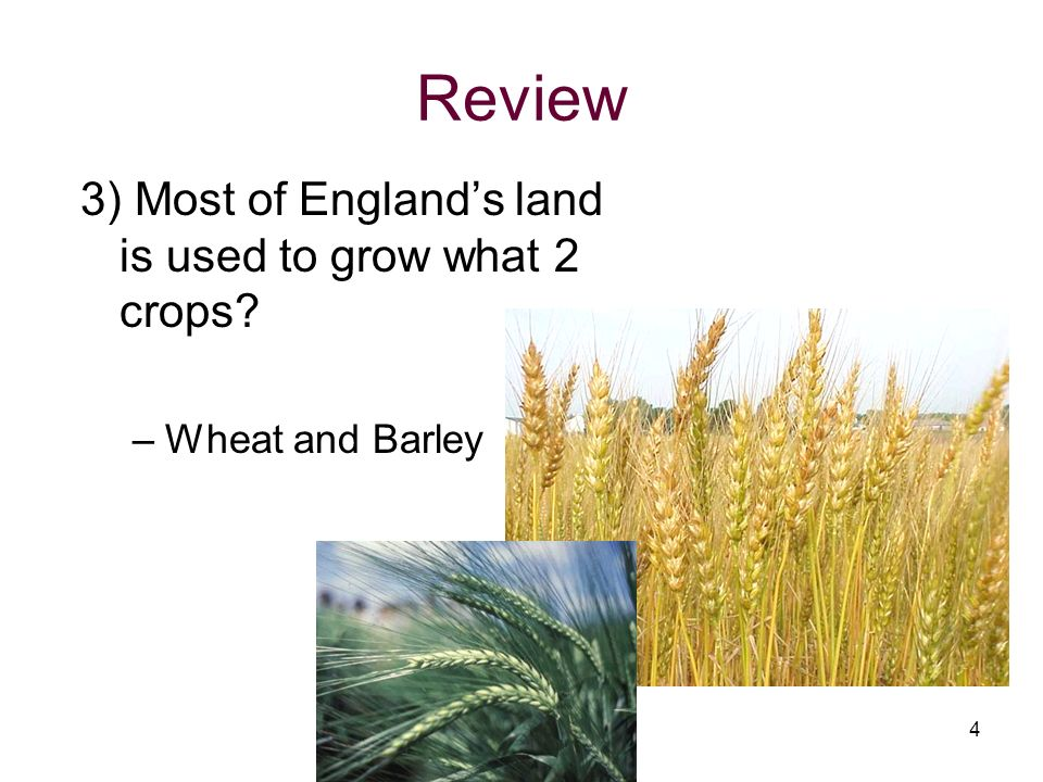Review 3) Most of England's land is used to grow what 2 crops