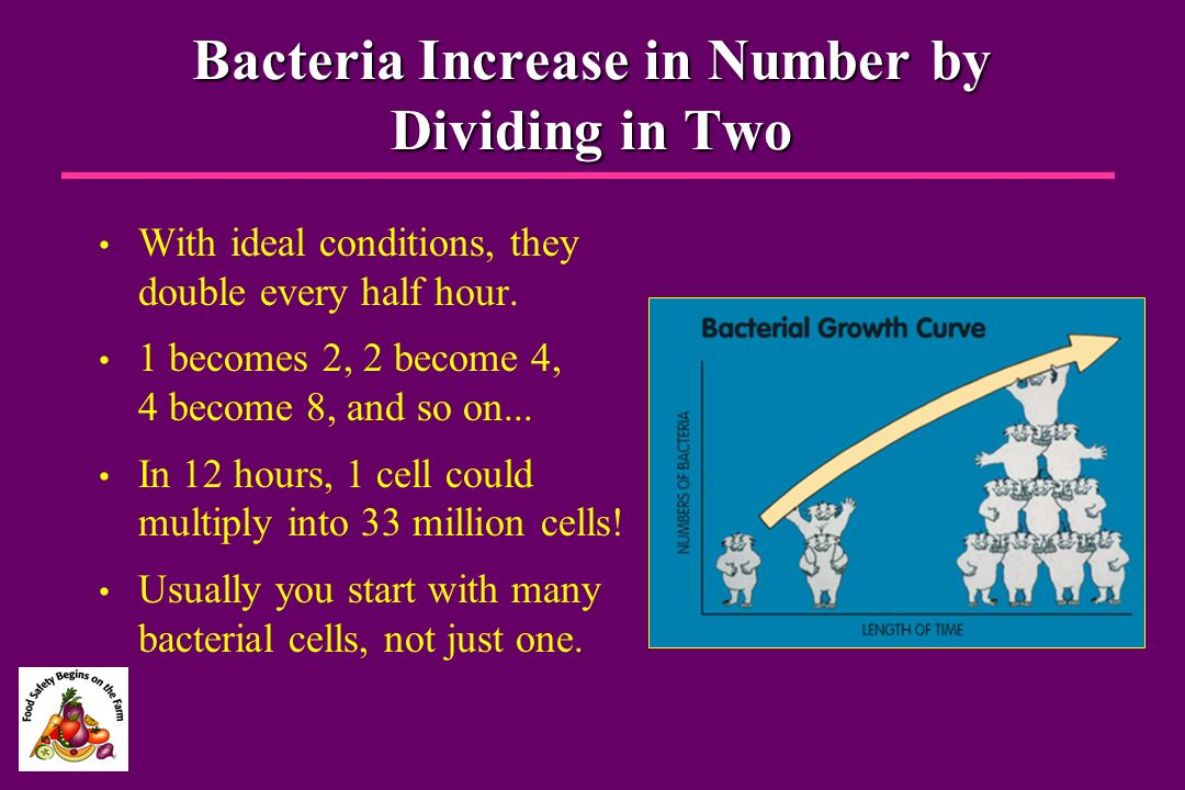 Bacteria Increase in Number by Dividing in Two