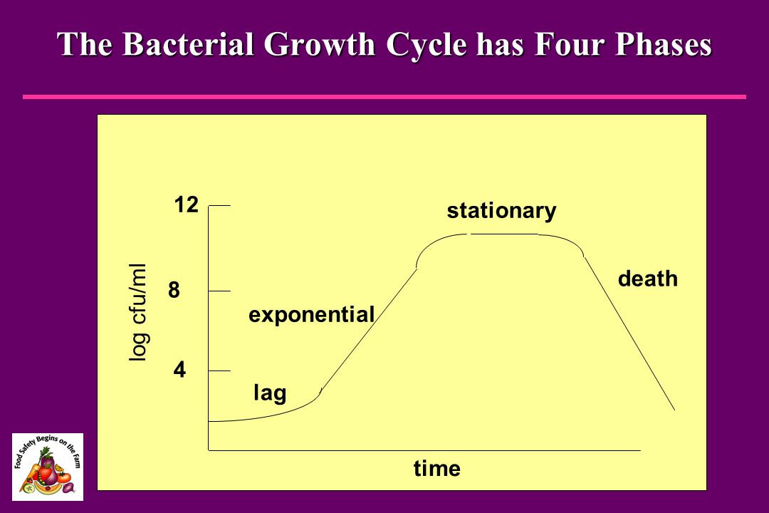 The Bacterial Growth Cycle has Four Phases