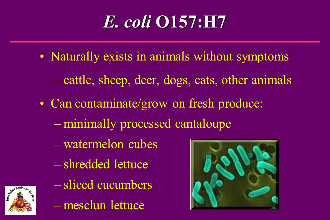 E. coli O157:H7 Naturally exists in animals without symptoms