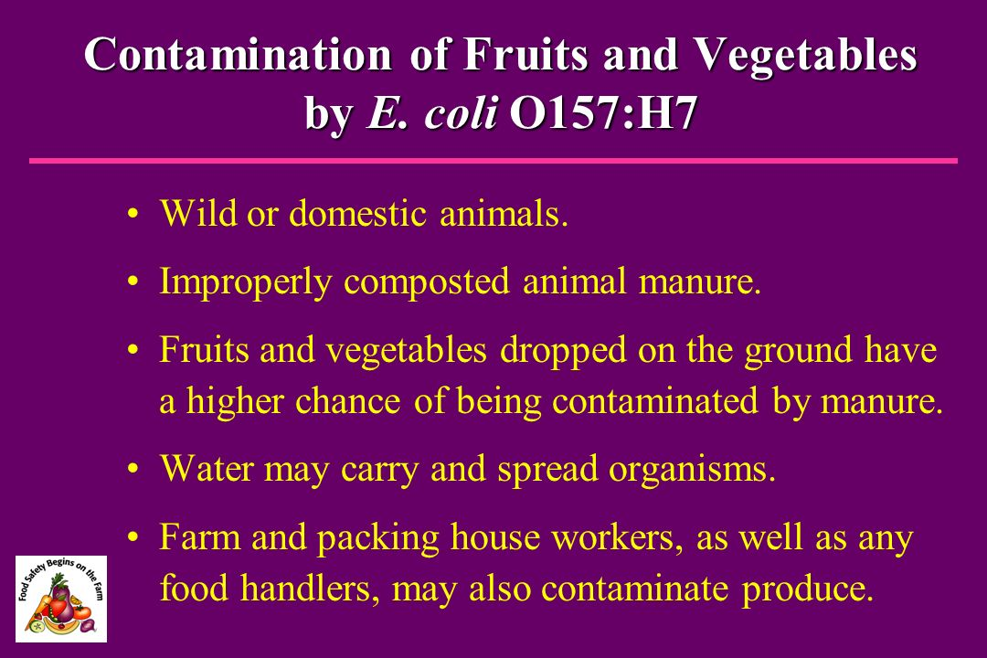 Contamination of Fruits and Vegetables by E. coli O157:H7
