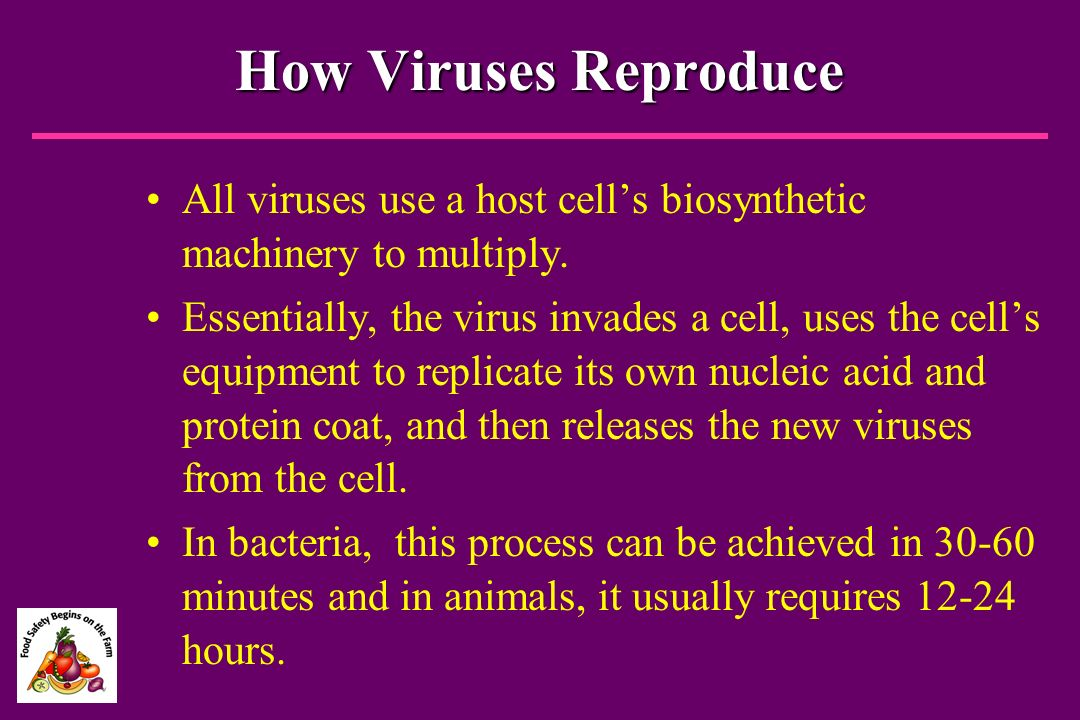 How Viruses Reproduce All viruses use a host cell's biosynthetic machinery to multiply.