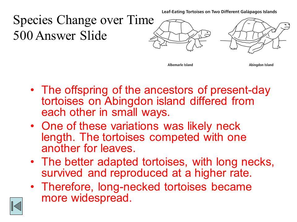 Species Change over Time 500 Answer Slide