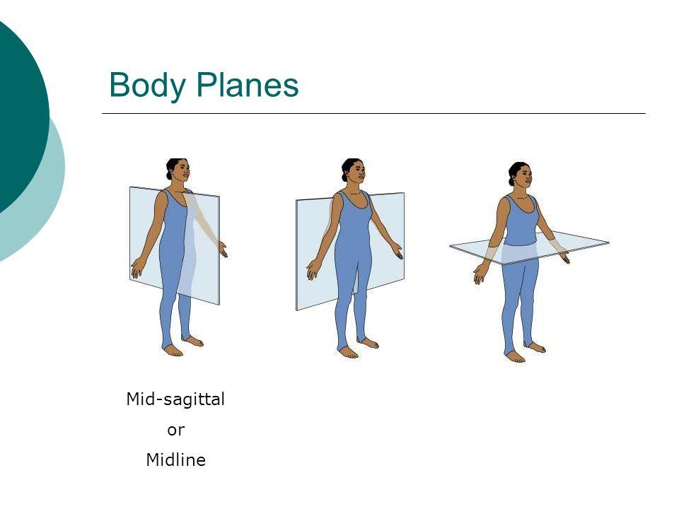 Body Planes Mid-sagittal or Midline