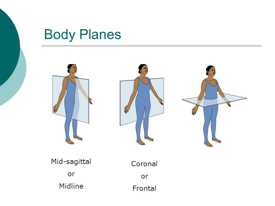 Body Planes Mid-sagittal or Midline Coronal or Frontal