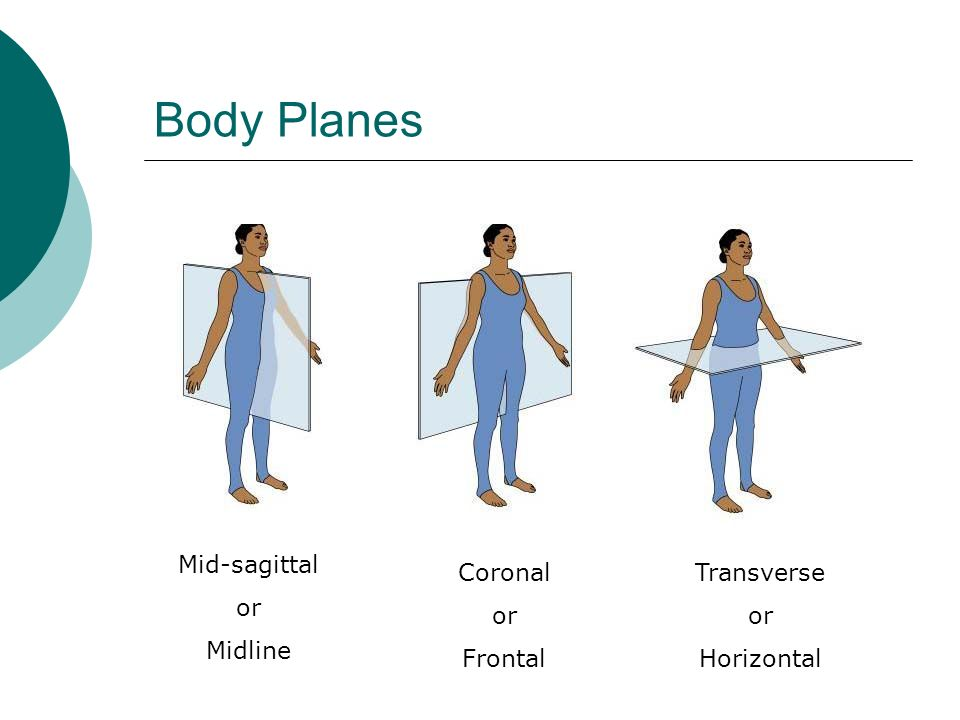 Body Planes Mid-sagittal or Midline Coronal or Frontal Transverse or