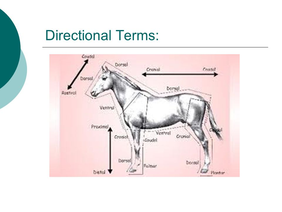 Directional Terms: