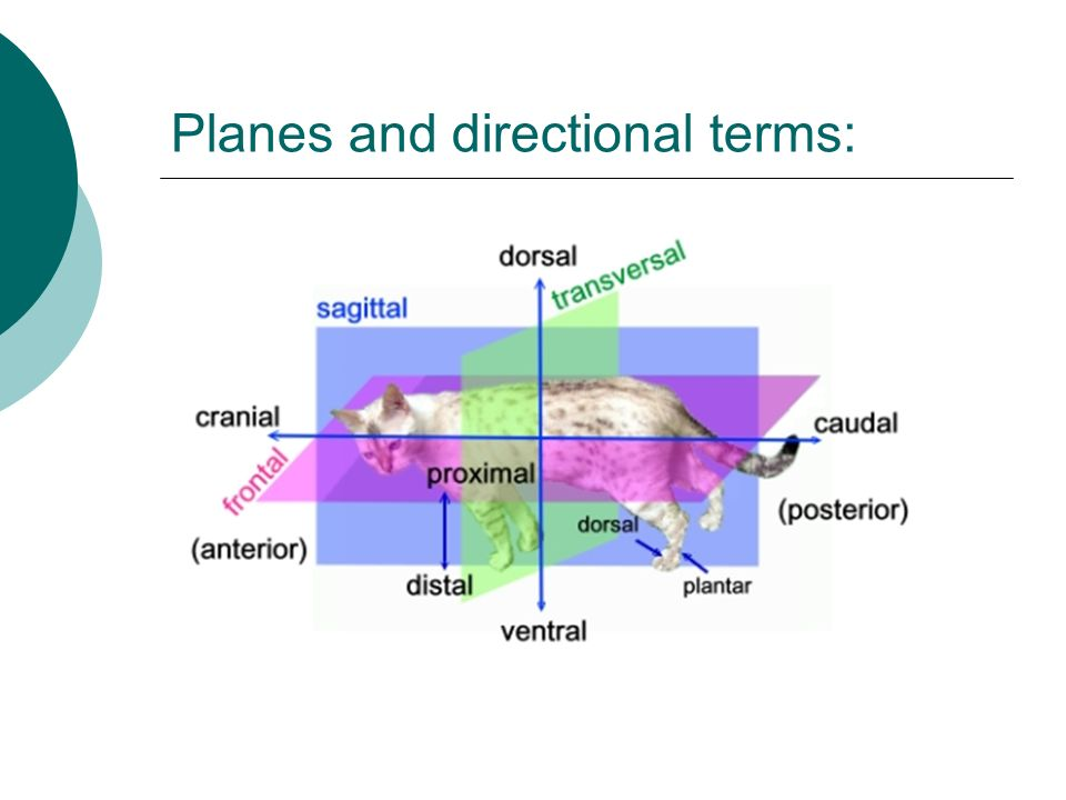 Planes and directional terms: