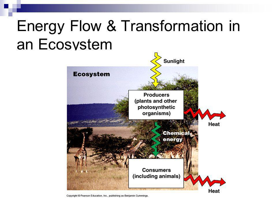 Energy Flow & Transformation in an Ecosystem