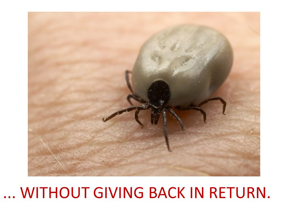 ... WITHOUT GIVING BACK IN RETURN.