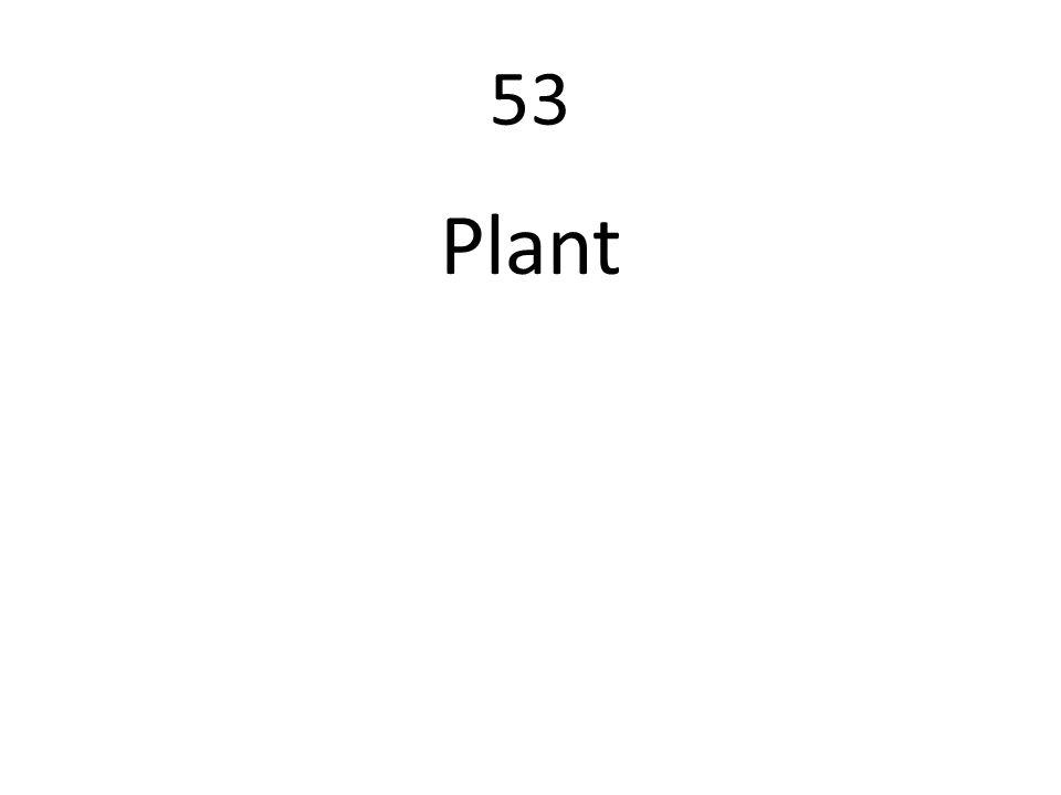 53 Plant