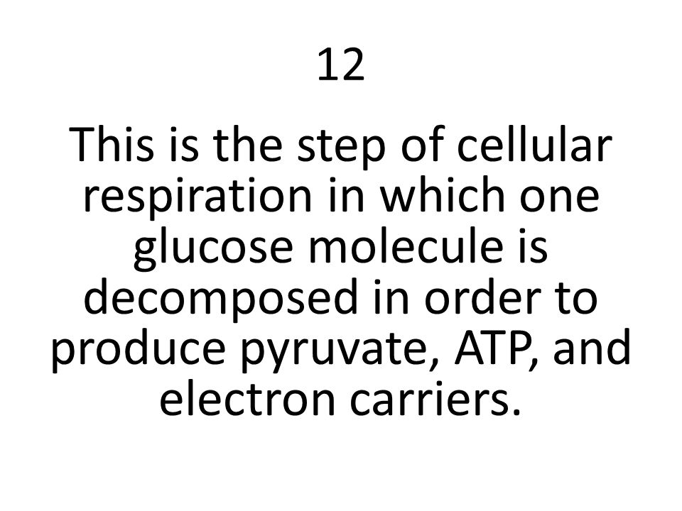 12 This is the step of cellular respiration in which one glucose molecule is decomposed in order to produce pyruvate, ATP, and electron carriers.