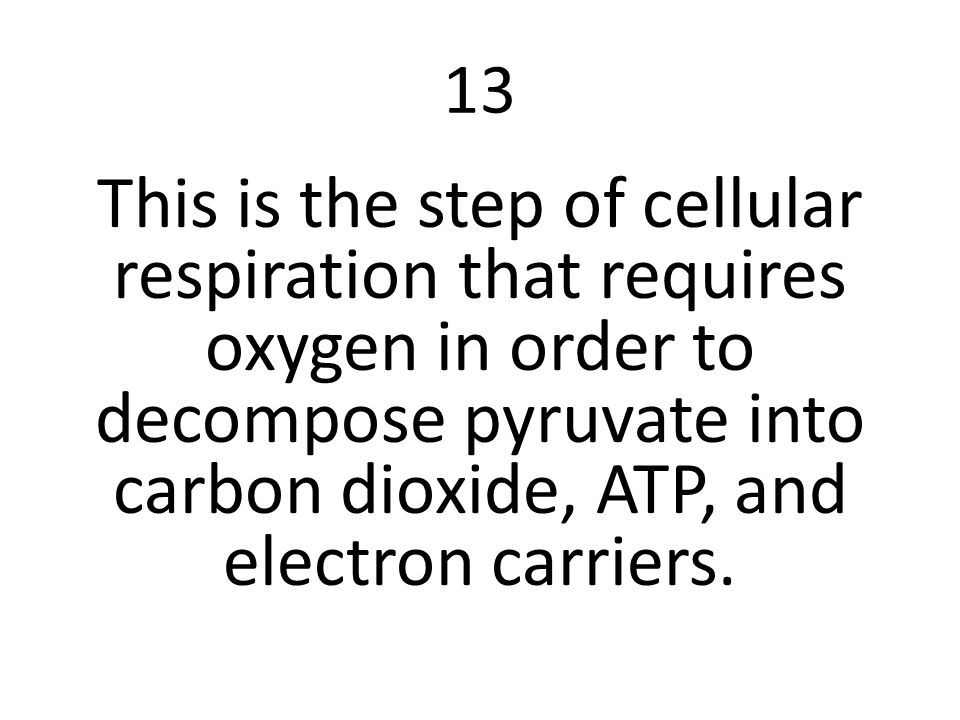 13 This is the step of cellular respiration that requires oxygen in order to decompose pyruvate into carbon dioxide, ATP, and electron carriers.