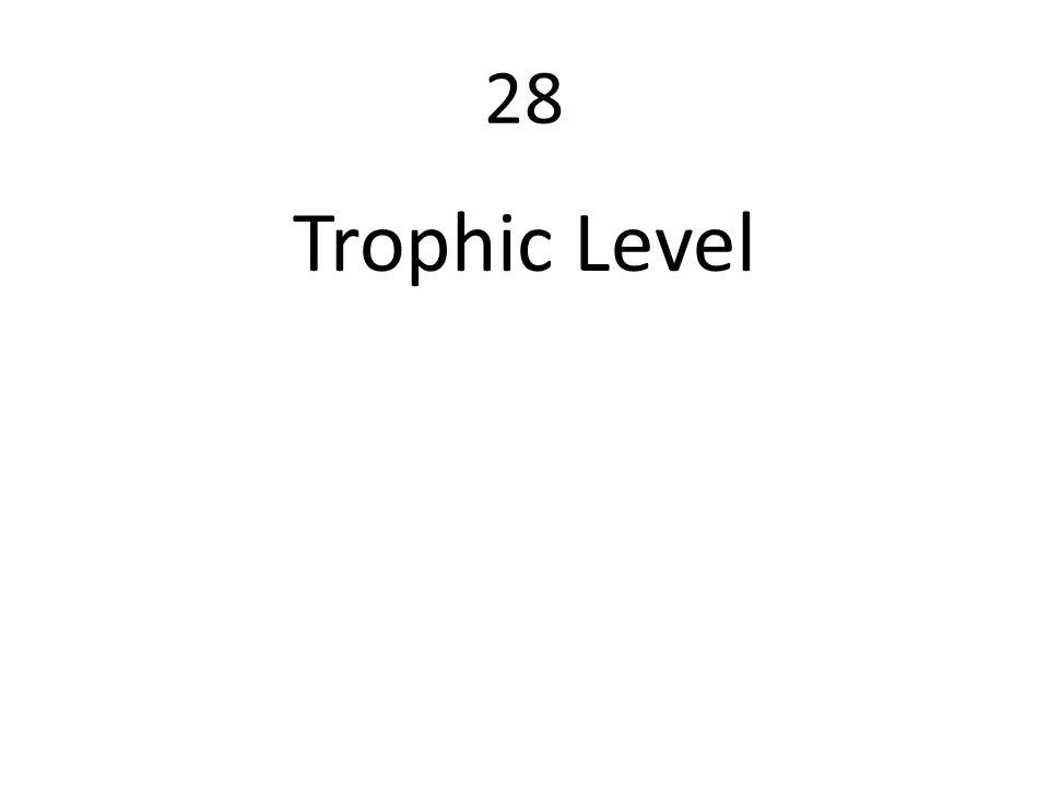 28 Trophic Level