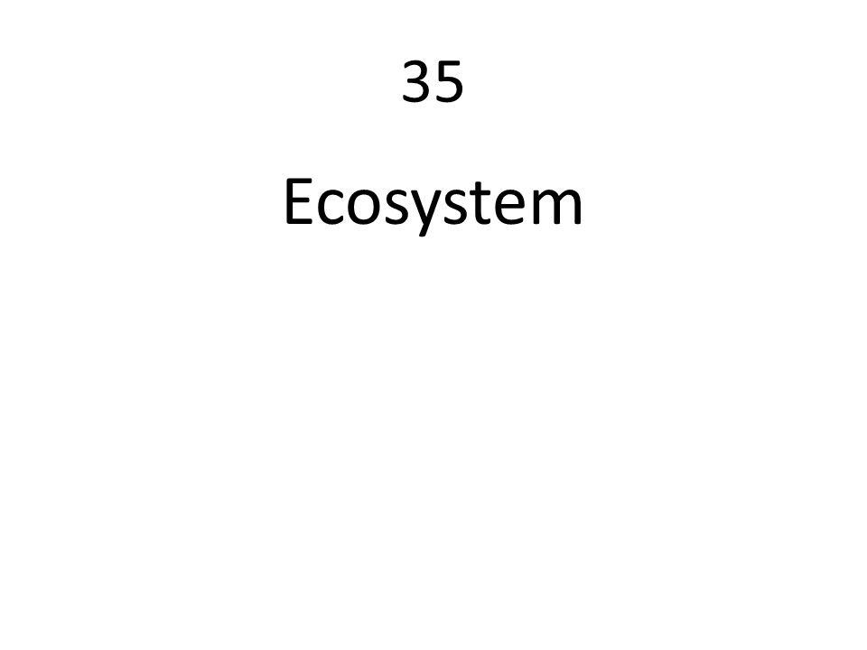 35 Ecosystem