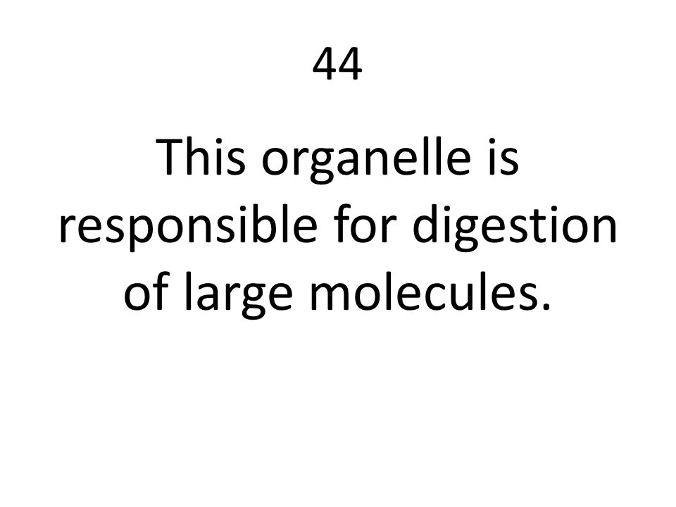 This organelle is responsible for digestion of large molecules.