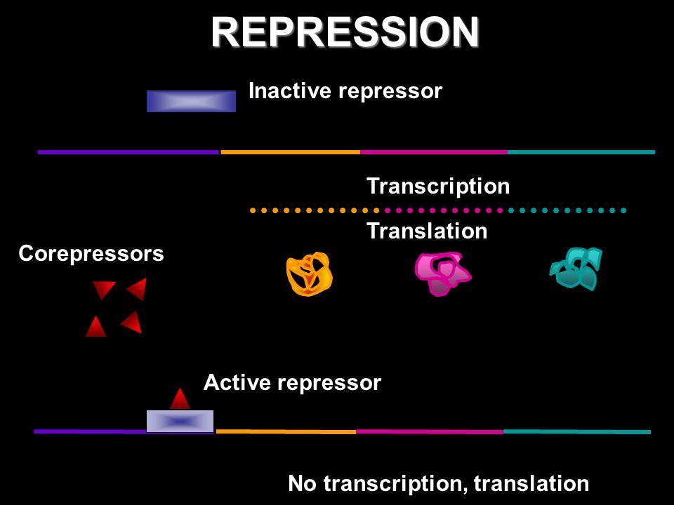 REPRESSION Inactive repressor Transcription Translation Corepressors