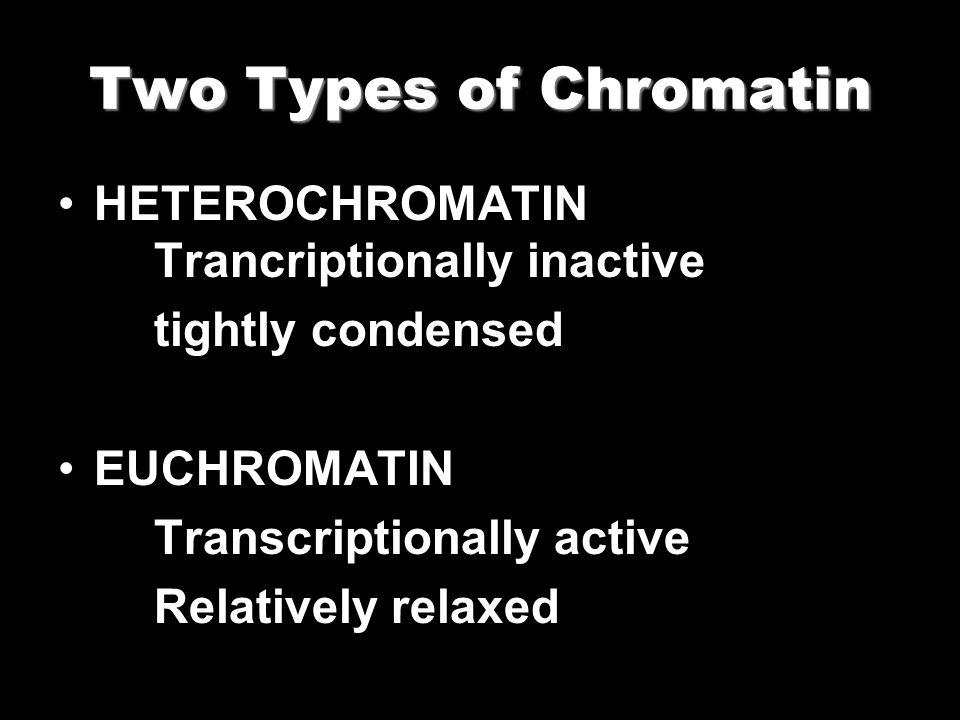 Two Types of Chromatin HETEROCHROMATIN Trancriptionally inactive