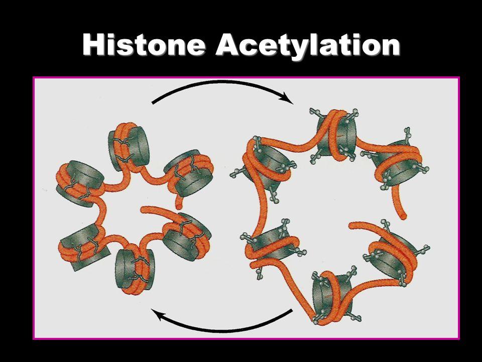 Histone Acetylation