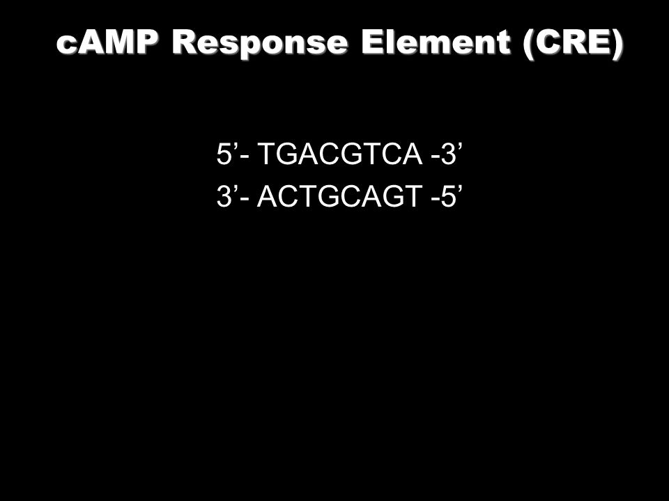cAMP Response Element (CRE)