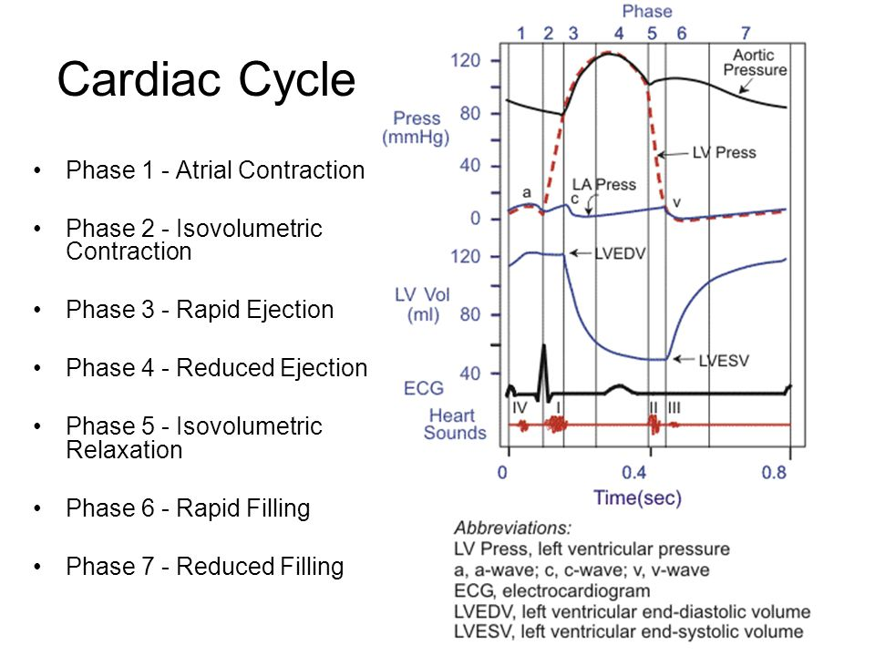 Cardiac Cycle Phase 1 - Atrial Contraction