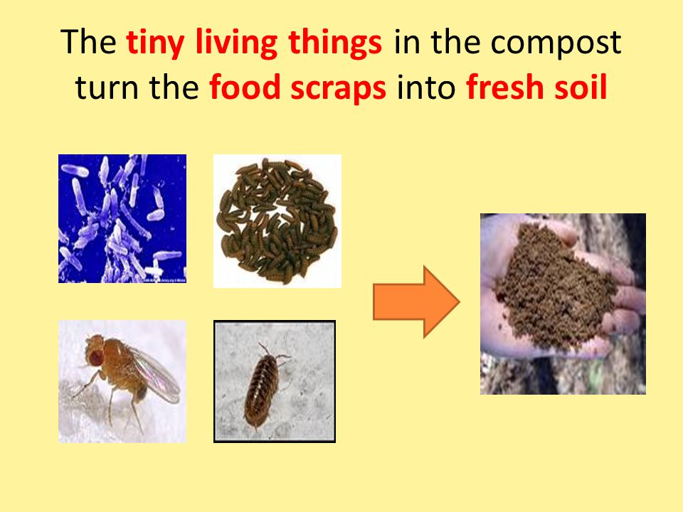 The tiny living things in the compost turn the food scraps into fresh soil