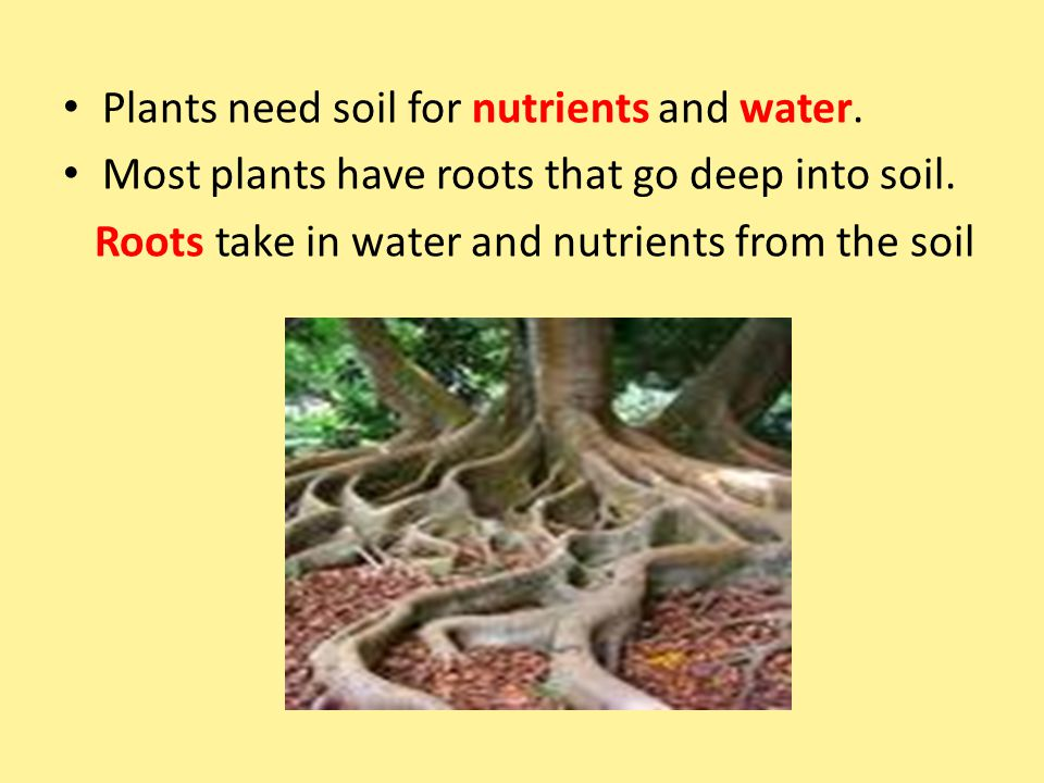 Plants need soil for nutrients and water.