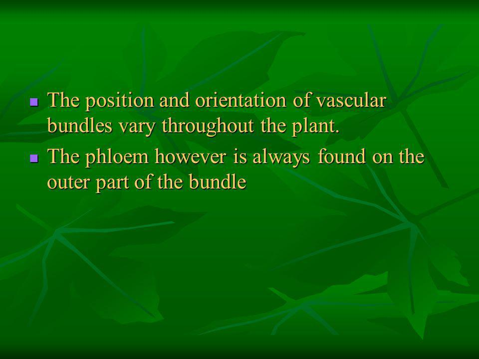 The position and orientation of vascular bundles vary throughout the plant.