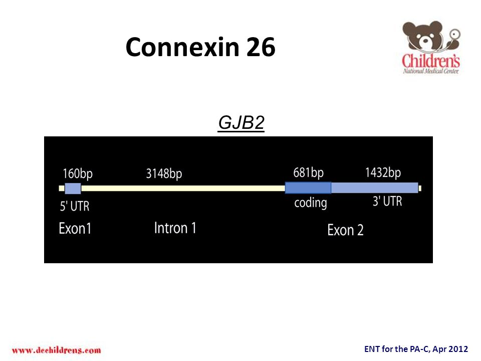 Connexin 26 GJB2.