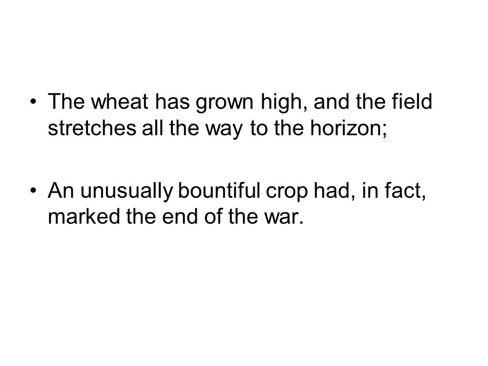 The wheat has grown high, and the field stretches all the way to the horizon;