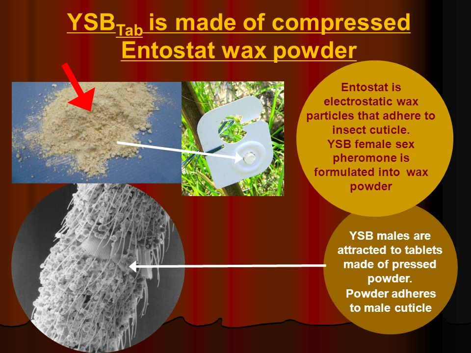 YSBTab is made of compressed Entostat wax powder