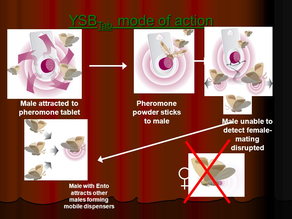 YSBTab mode of action Male attracted to pheromone tablet