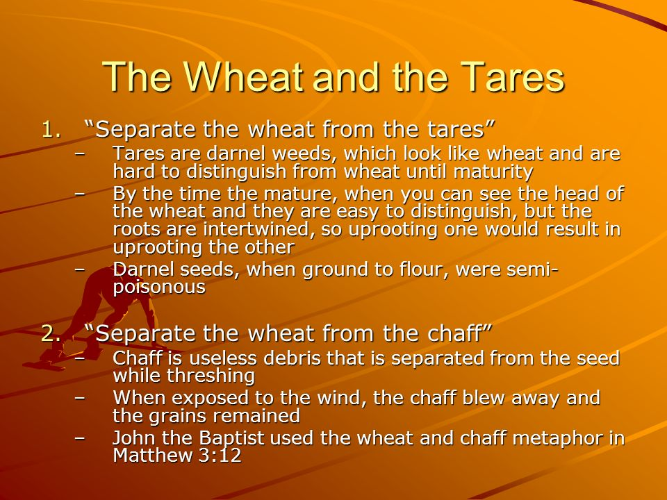 The Wheat and the Tares Separate the wheat from the tares