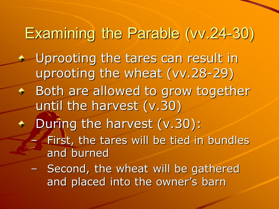 Examining the Parable (vv.24-30)