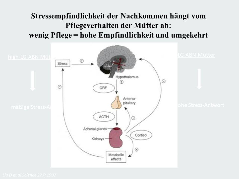 Stressempfindlichkeit der Nachkommen hängt vom Pflegeverhalten der Mütter ab: wenig Pflege = hohe Empfindlichkeit und umgekehrt