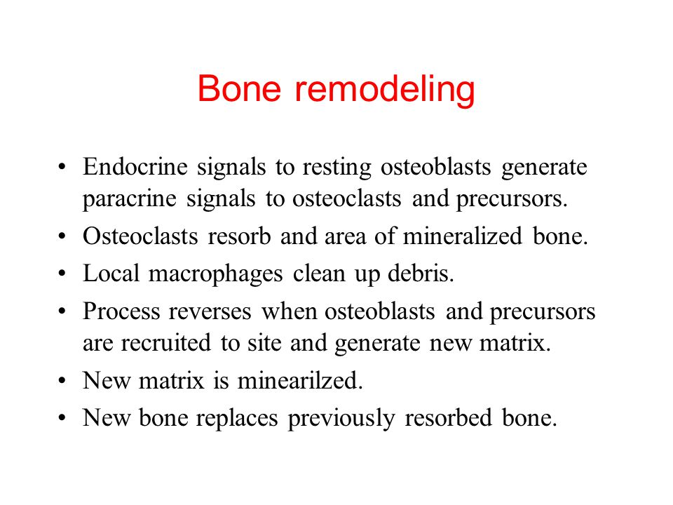 Bone remodeling Endocrine signals to resting osteoblasts generate paracrine signals to osteoclasts and precursors.