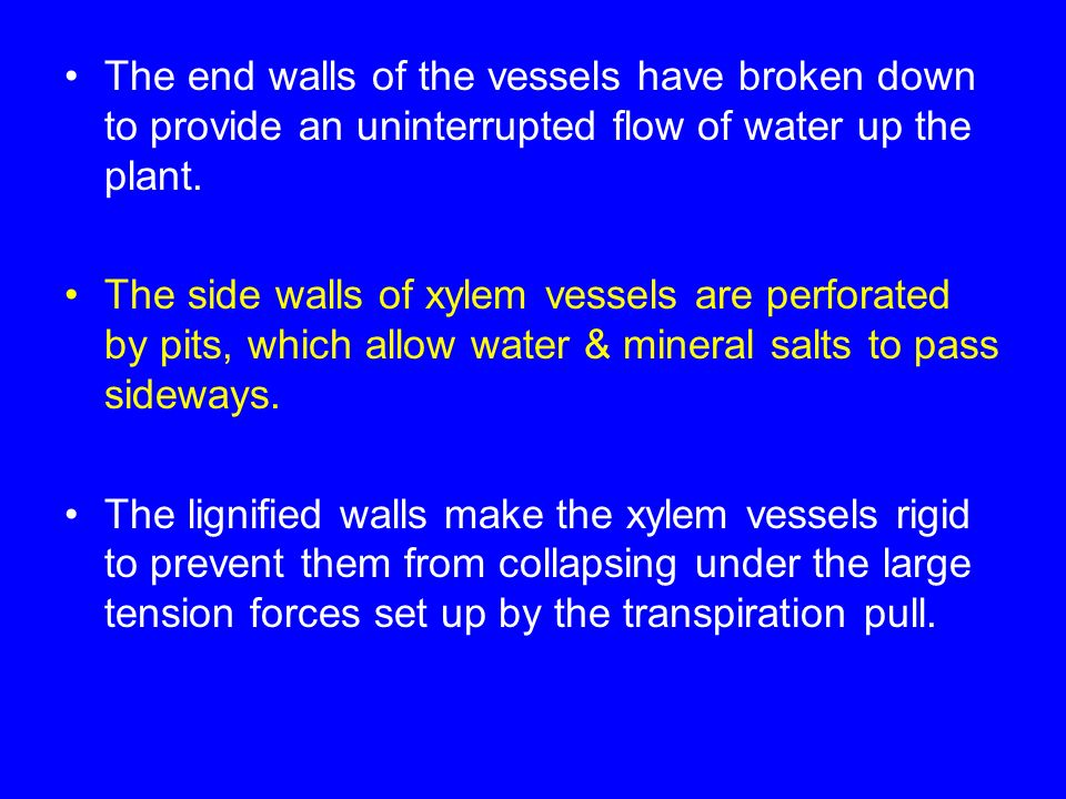 The end walls of the vessels have broken down to provide an uninterrupted flow of water up the plant.