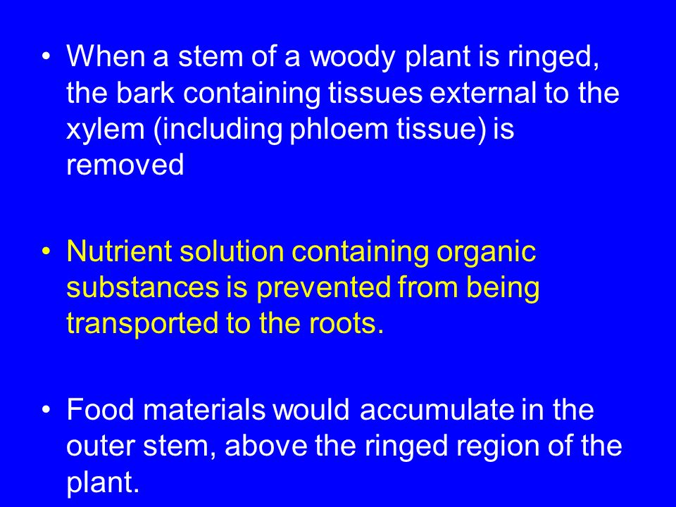 When a stem of a woody plant is ringed, the bark containing tissues external to the xylem (including phloem tissue) is removed