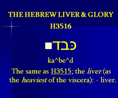 THE HEBREW LIVER & GLORY