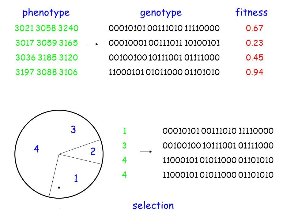 phenotype genotype fitness 3 4 2 1 selection 3021 3058 3240