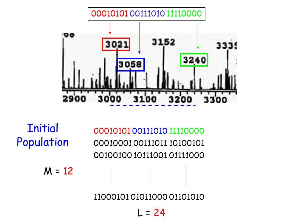 Initial Population M = 12 L = 24 00010101 00111010 11110000