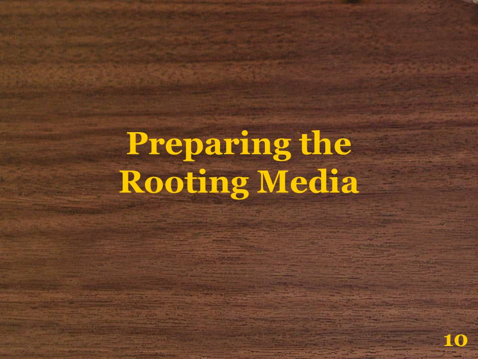 Preparing the Rooting Media