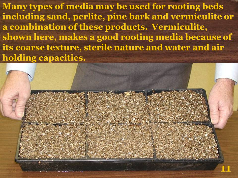Many types of media may be used for rooting beds including sand, perlite, pine bark and vermiculite or a combination of these products. Vermiculite, shown here, makes a good rooting media because of its coarse texture, sterile nature and water and air holding capacities.